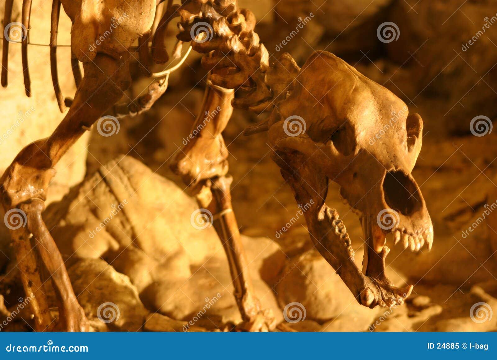 скелет медведя