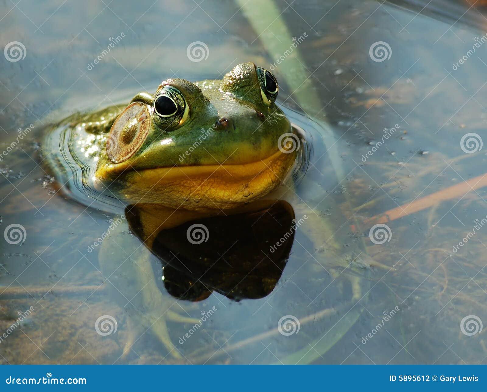 скопируйте космос лягушки стороны смешной