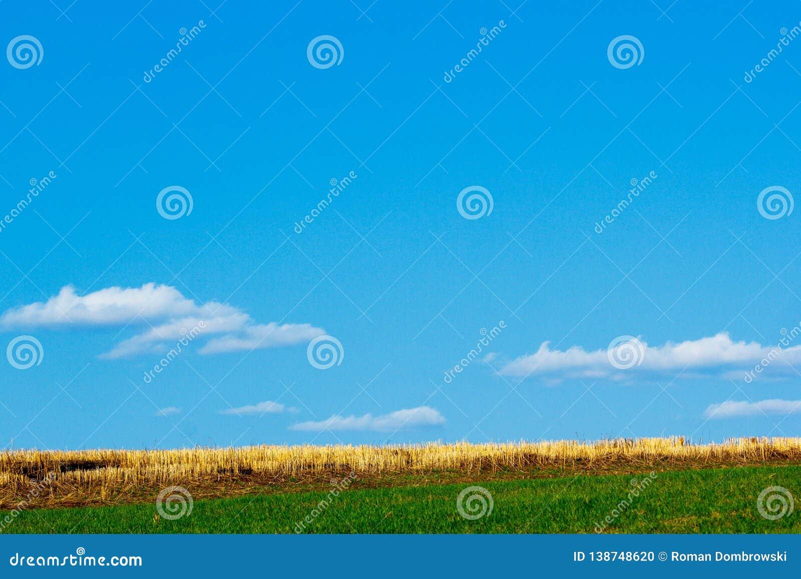 Скошенные черенок пшеницы