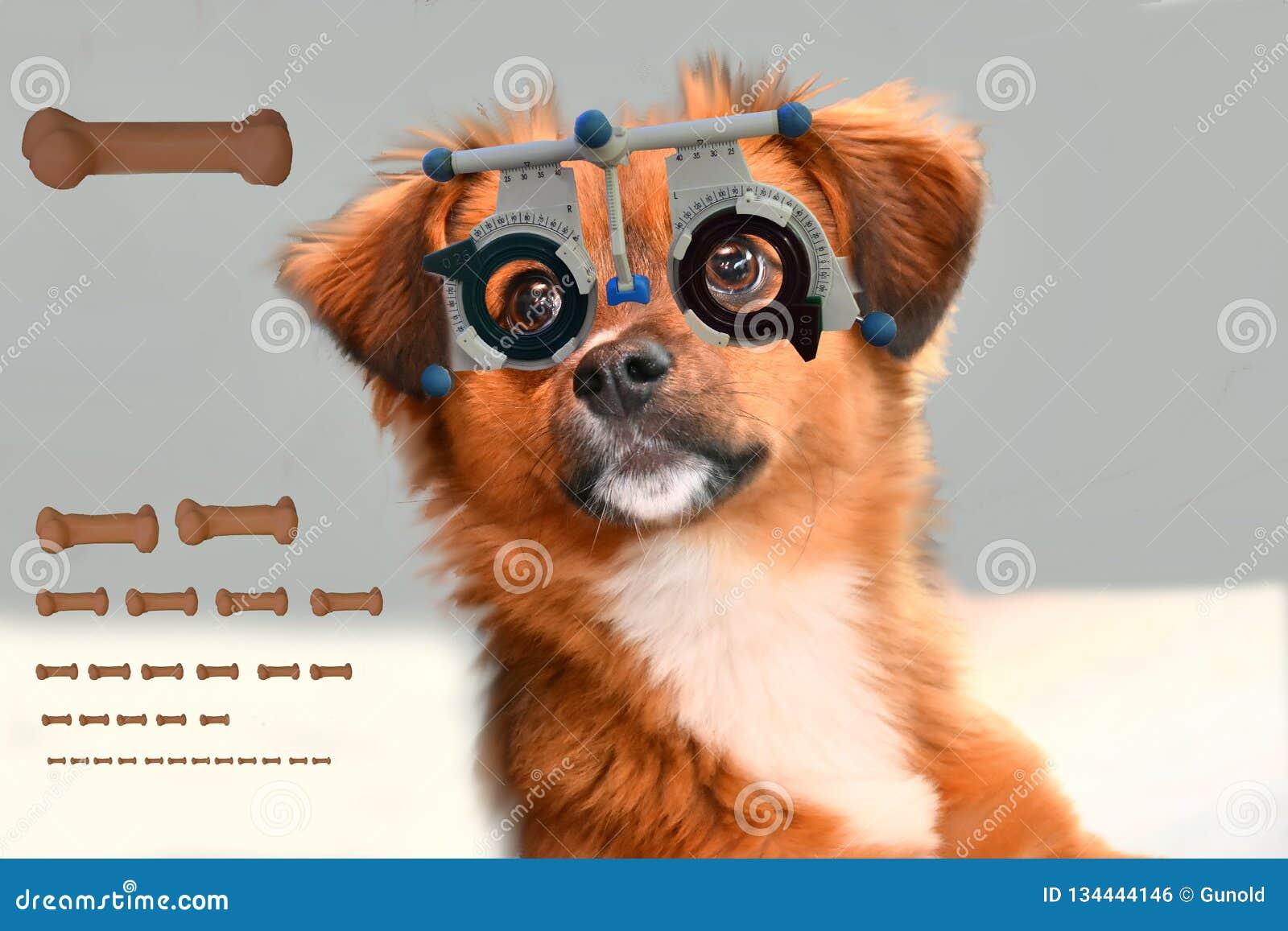Сладкий маленький moggy щенок на optician проверяя его зрение