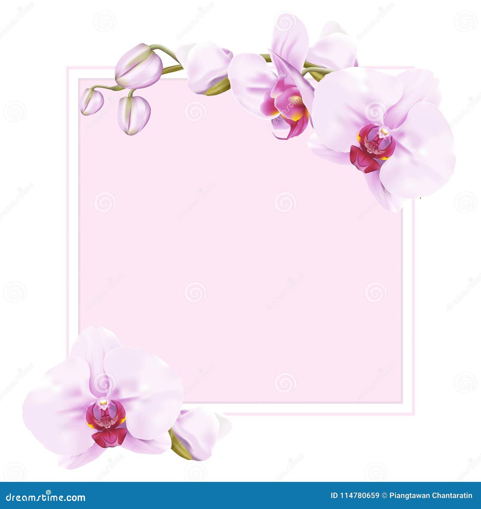 Сладостные розовые рамка и граница орхидеи сумеречницы