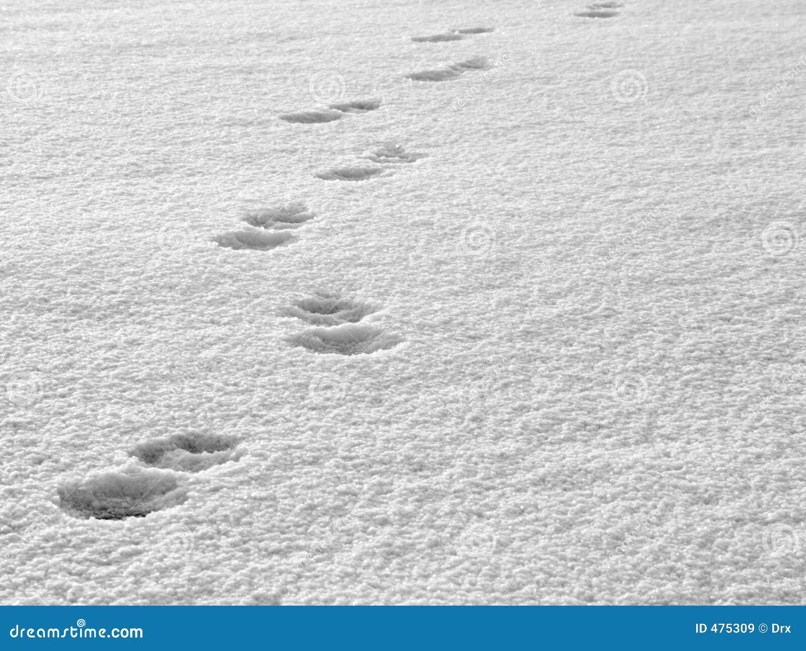 следы снежка