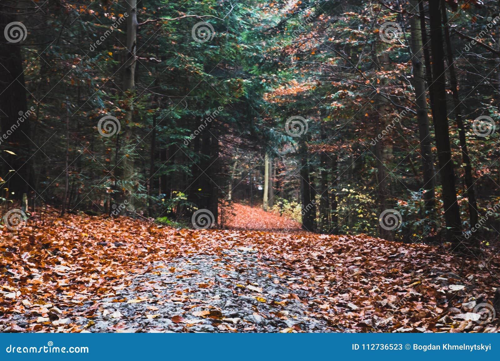 След в сосновом лесе осени