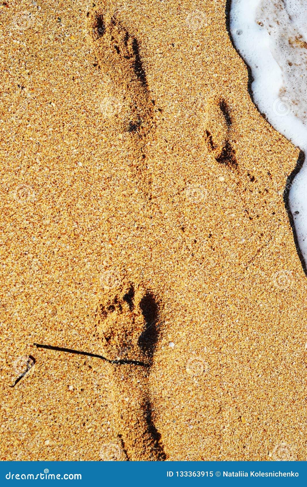 След ноги ребенка на песке на пляже