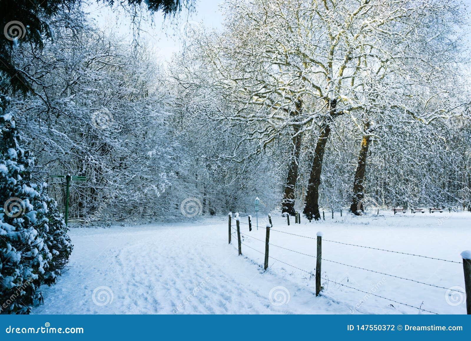 След Snowy на границе Forrest луг