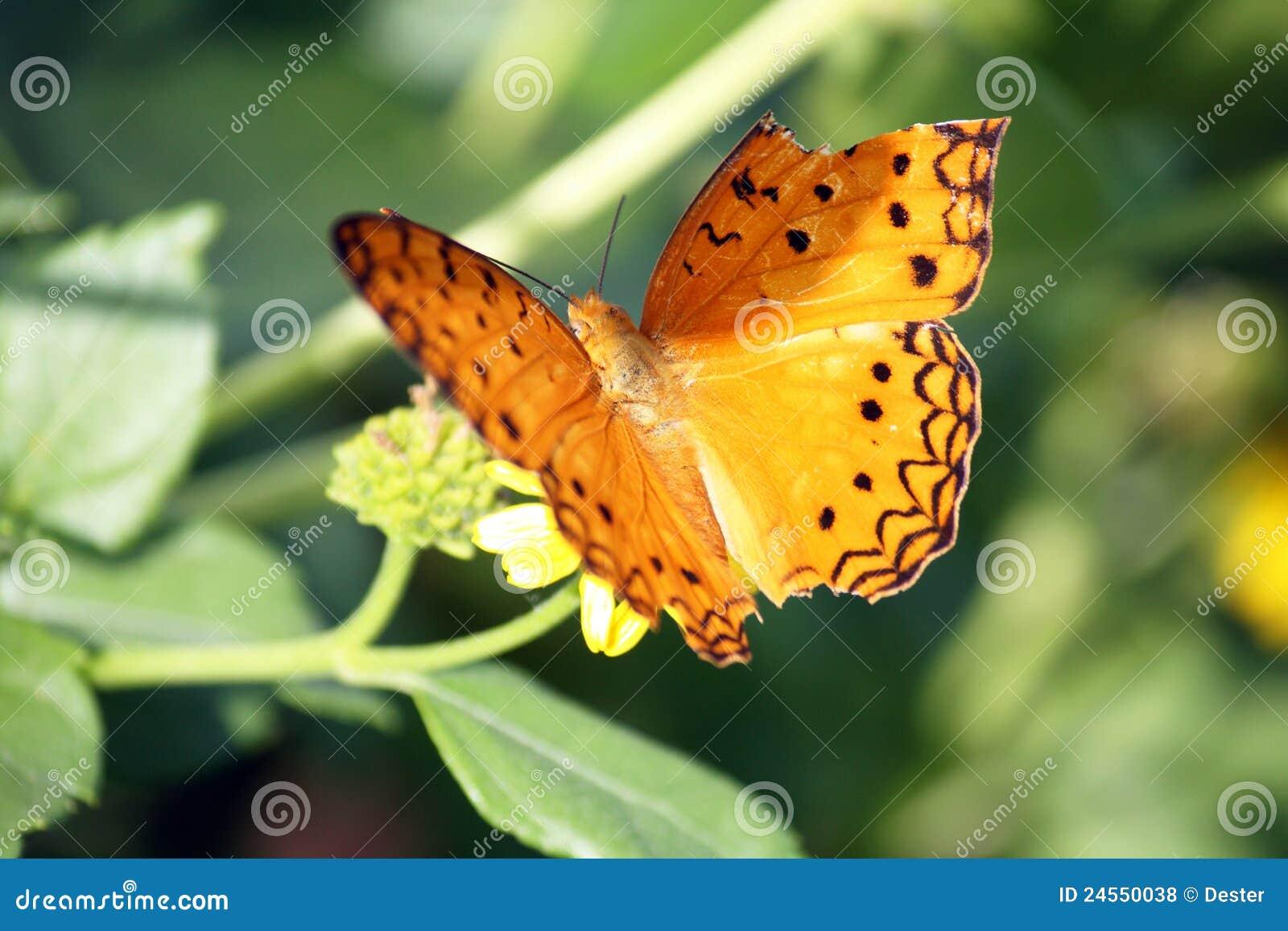 сломленное крыло бабочки