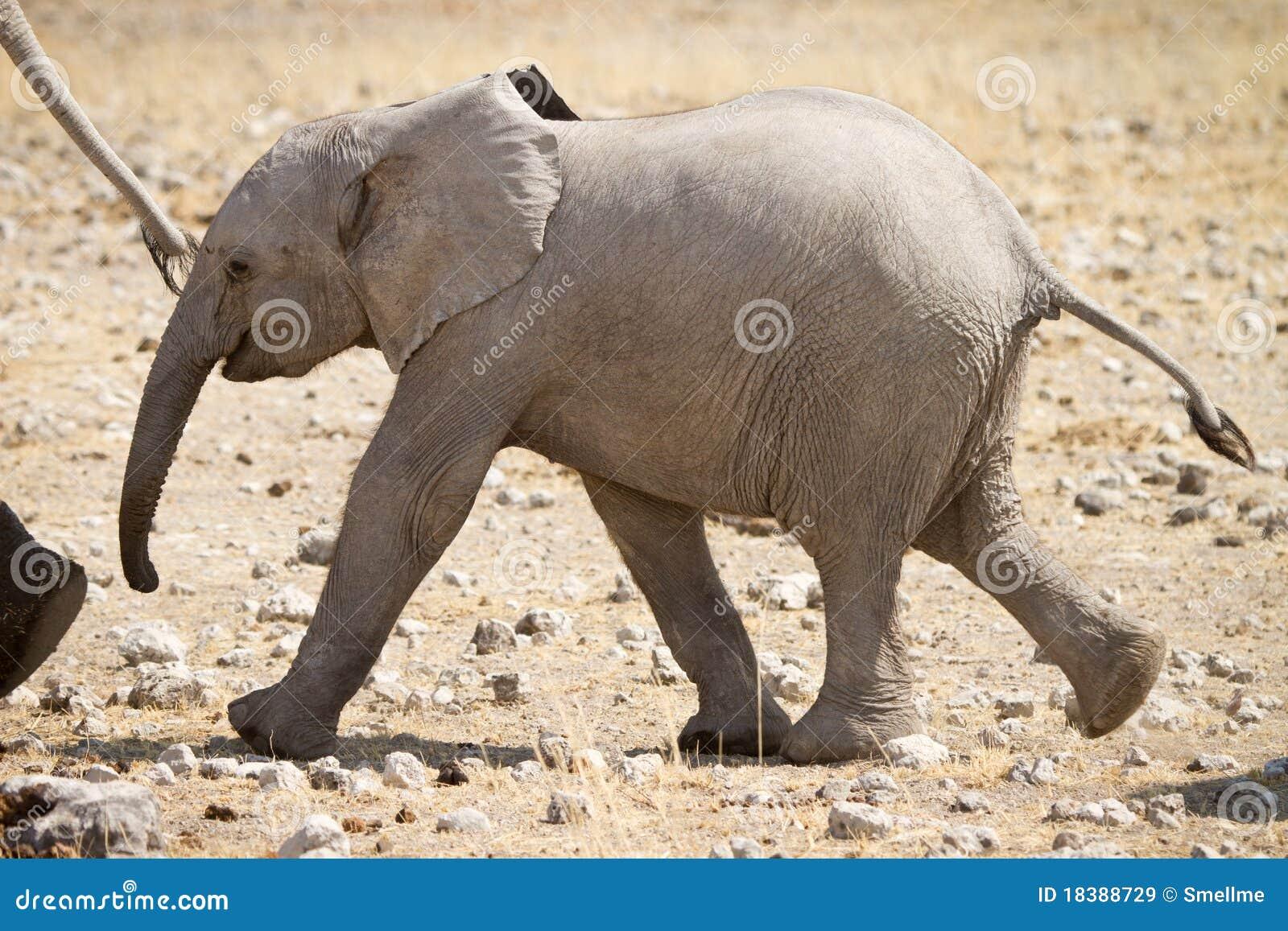 слон икры