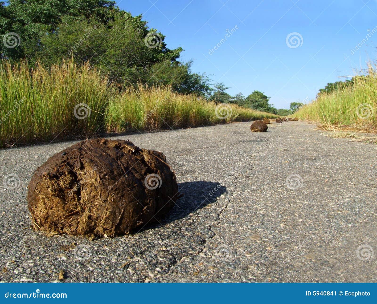 слон dung