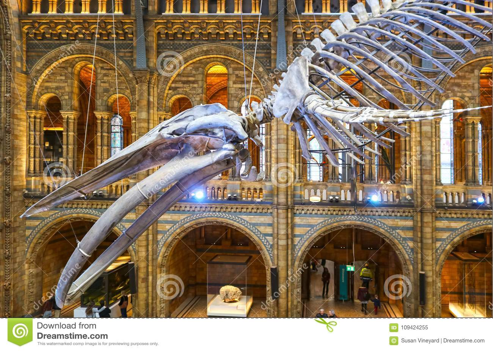 Смертная казнь через повешение синего кита каркасная в главной галерее музея естественной истории в Лондоне Великобритании - HDR