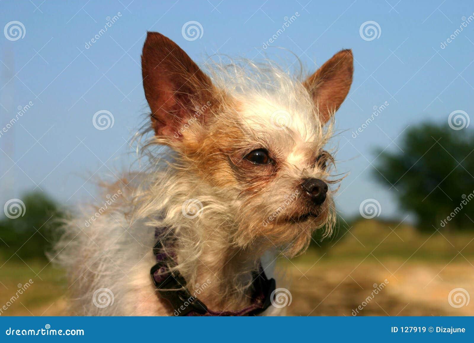 смешанная собака breed