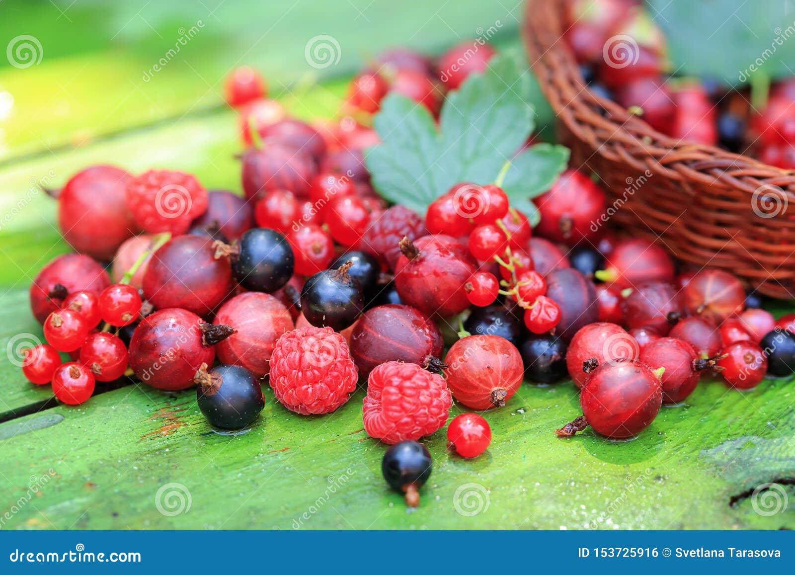 Смешивание различных ягод лета на деревянной предпосылке