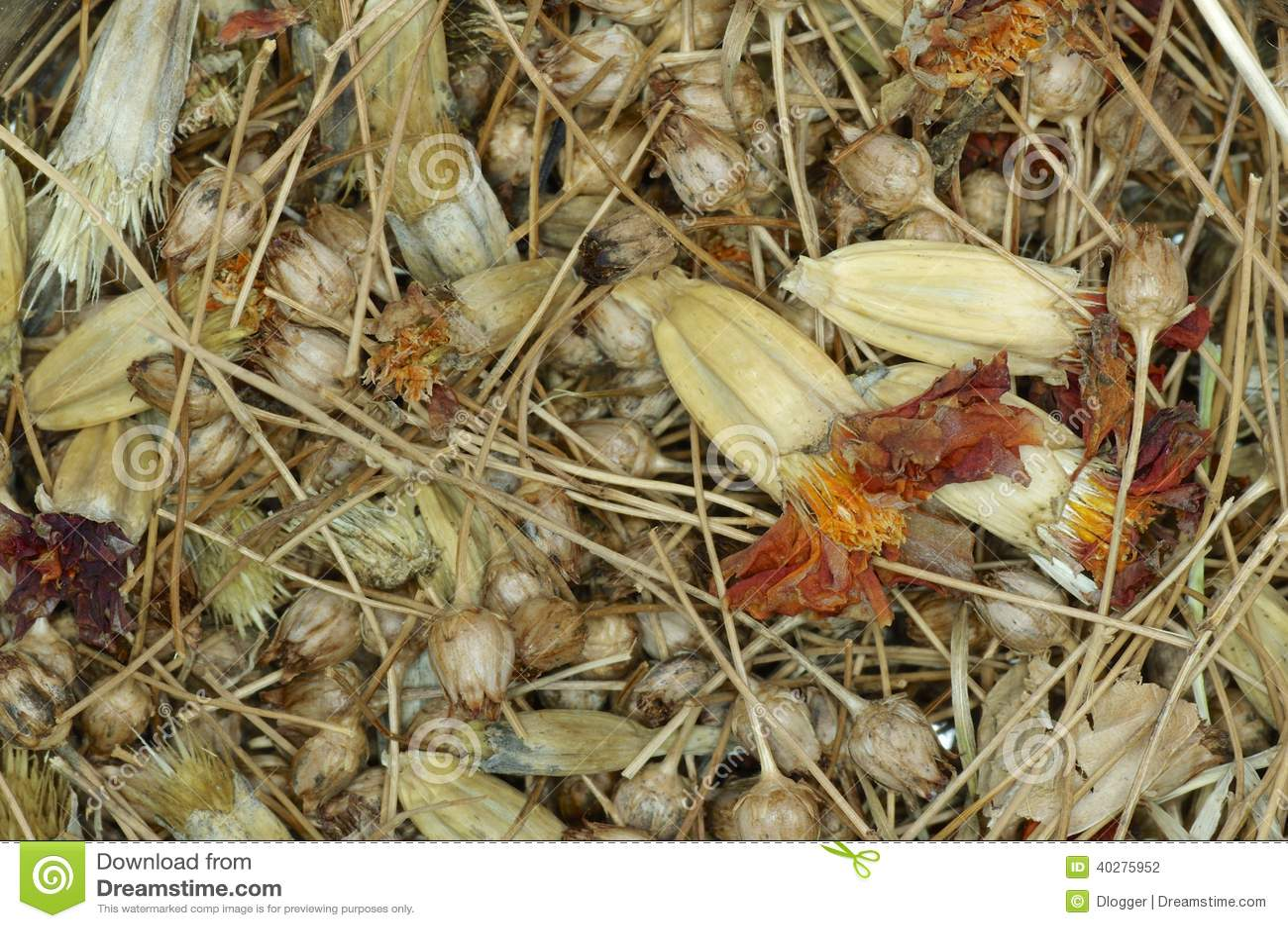 Смешивание семян wildflower и ноготк.