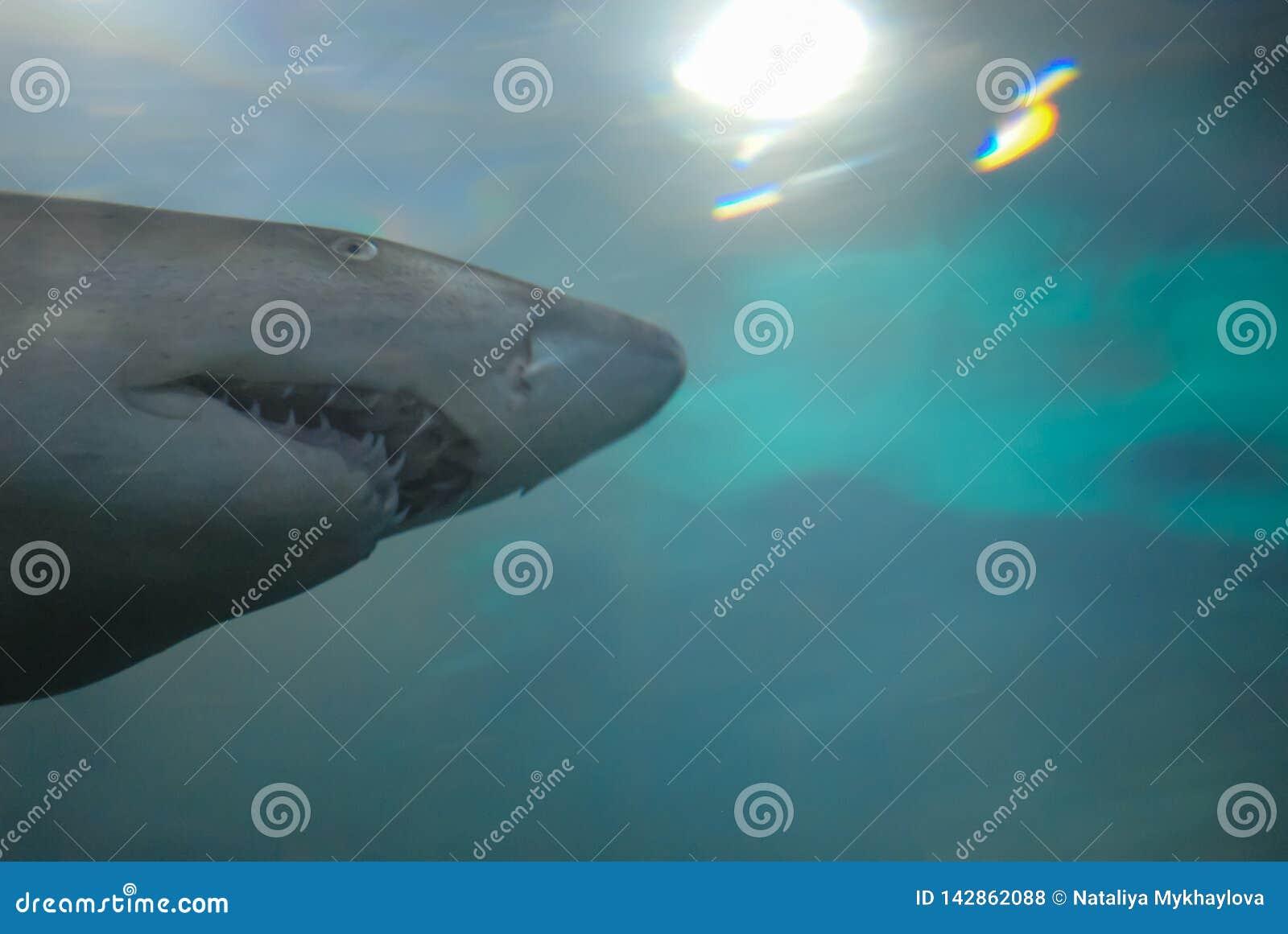смешная акула от фото oceanarium с космосом для текста