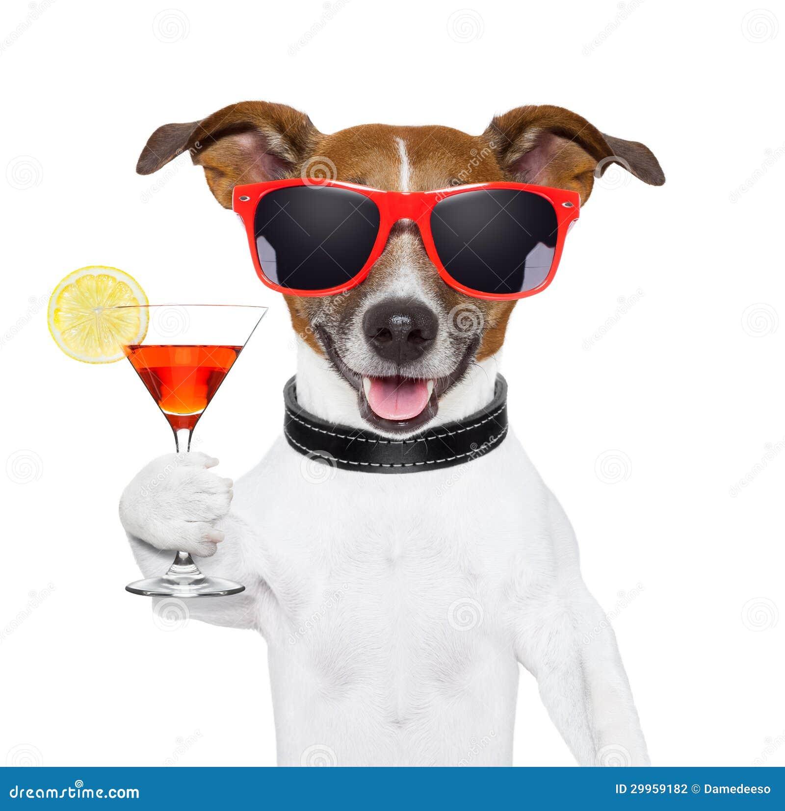 Смешная собака коктеила