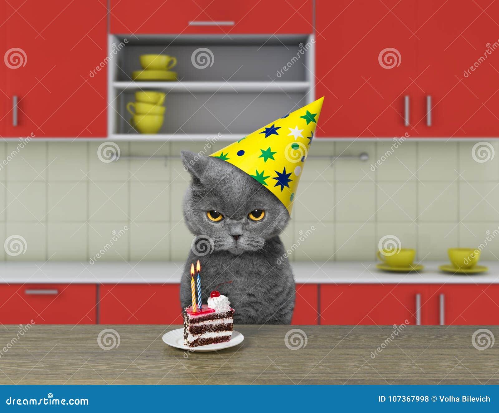 Смешной кот ждать для еды шоколадного торта