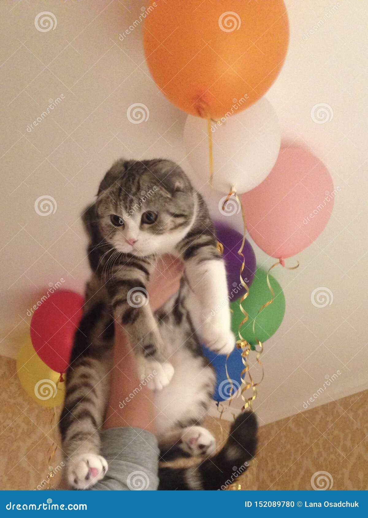 смешной кот с воздушными шарами
