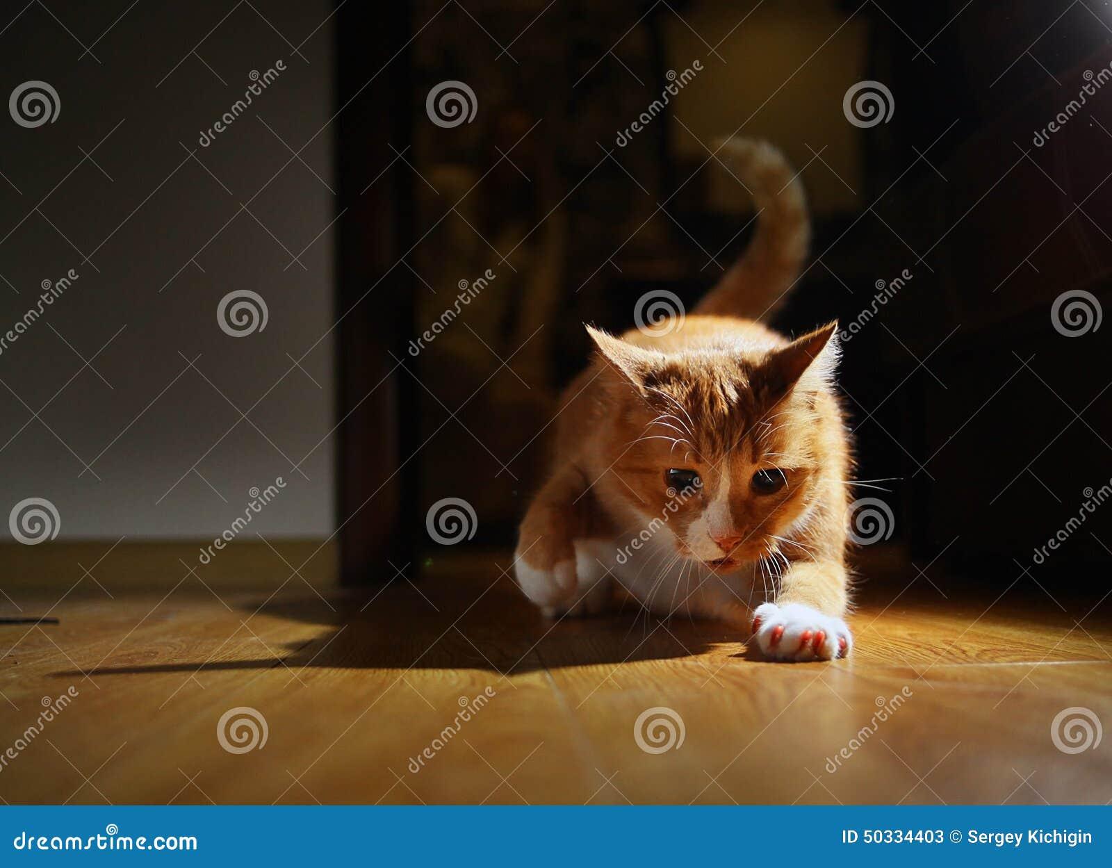 Смешные игры про кота