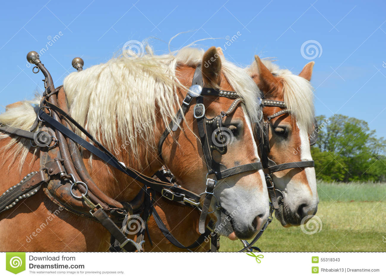 Смеясь над лошадь
