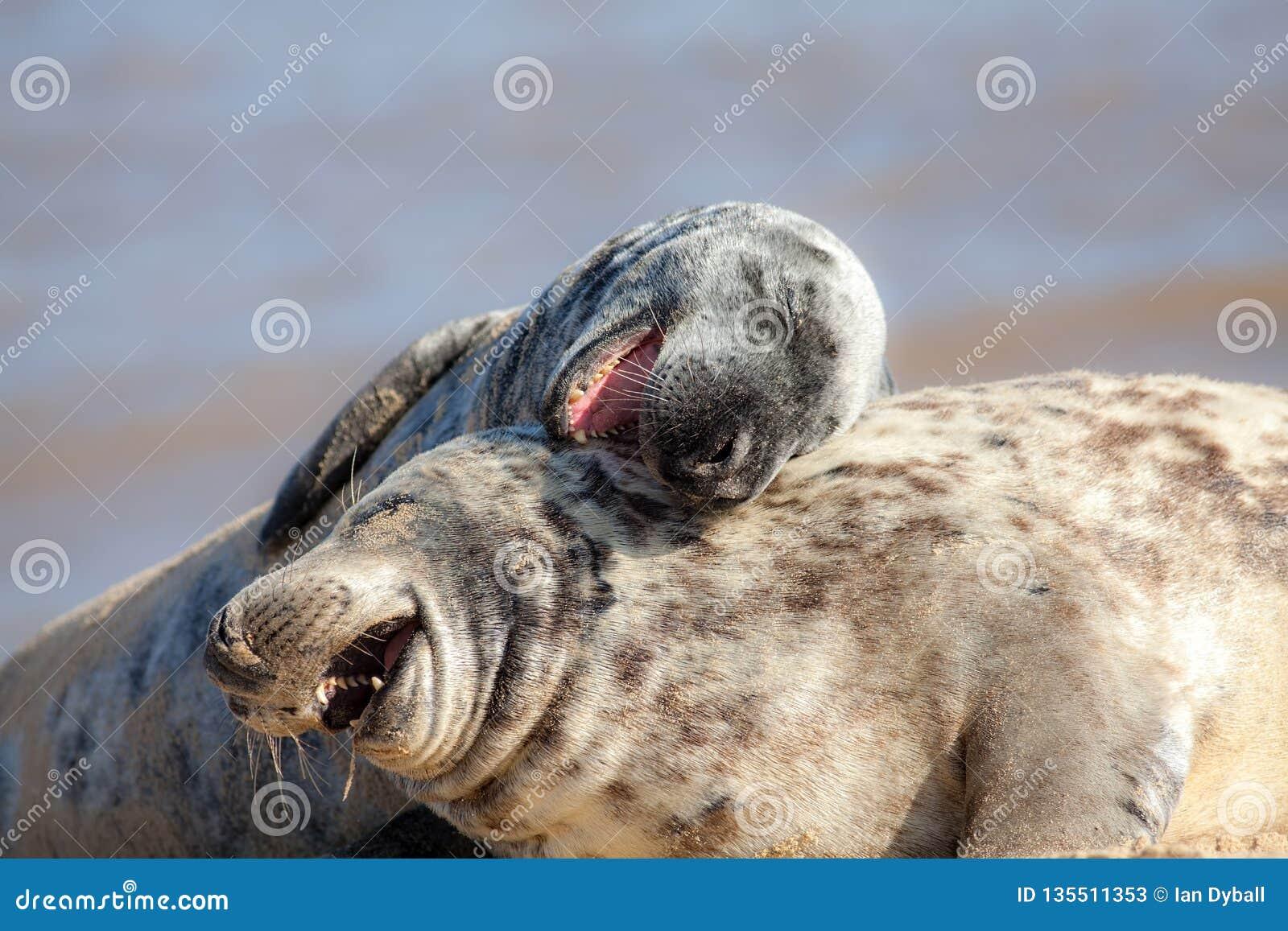 смеяться над громкий вне Смешное животное изображение meme Животные имея потеху