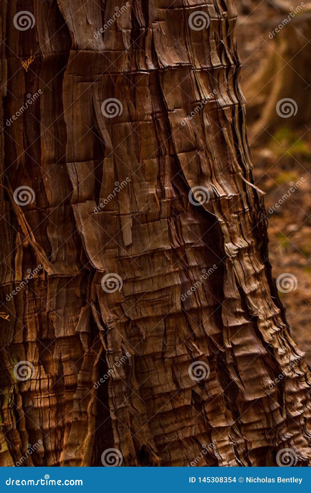 Сморщенная, Gnarled кора, Nikko Япония