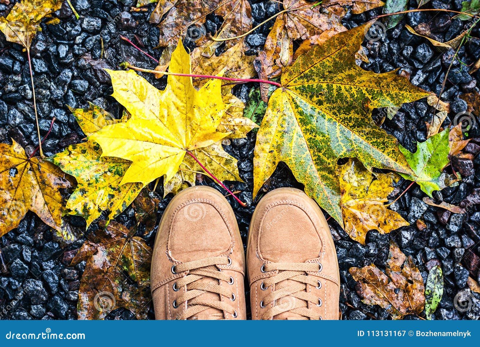 осень фото смотреть