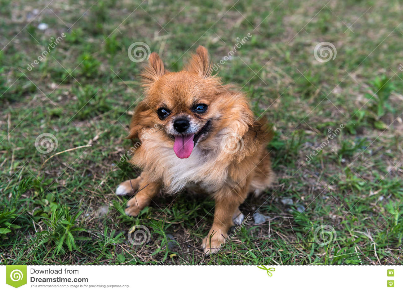 Download Смотреть щенка камеры стоковое изображение. изображение насчитывающей смотреть - 72279597