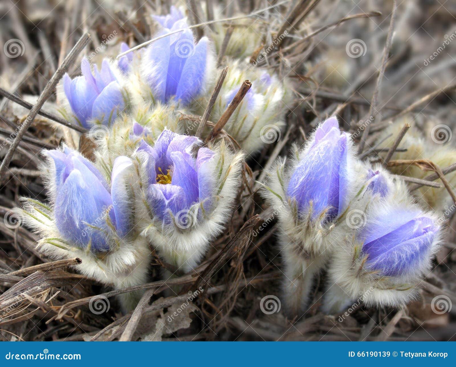 Картинки весны в марте