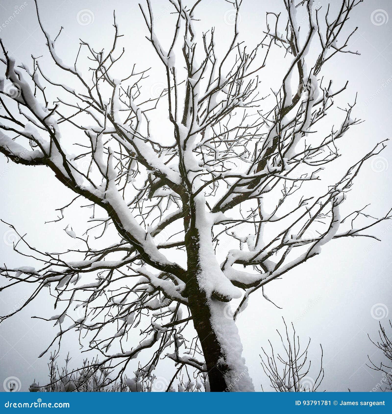 Снег вставленный к дереву