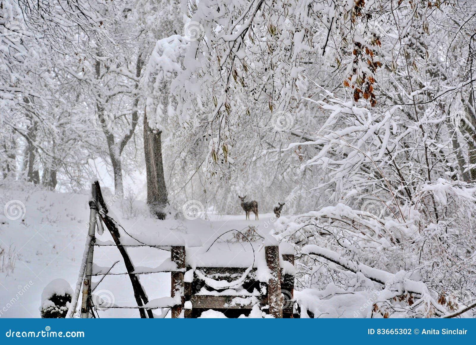 Снег зимы с оленями на проселочной дороге