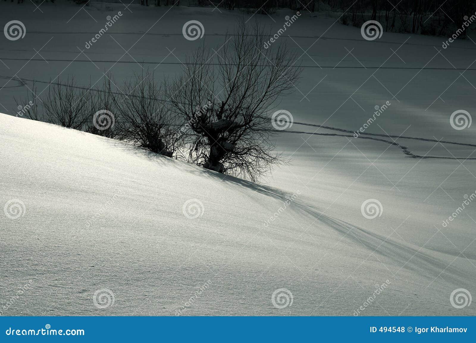 снежок ландшафта серебряный