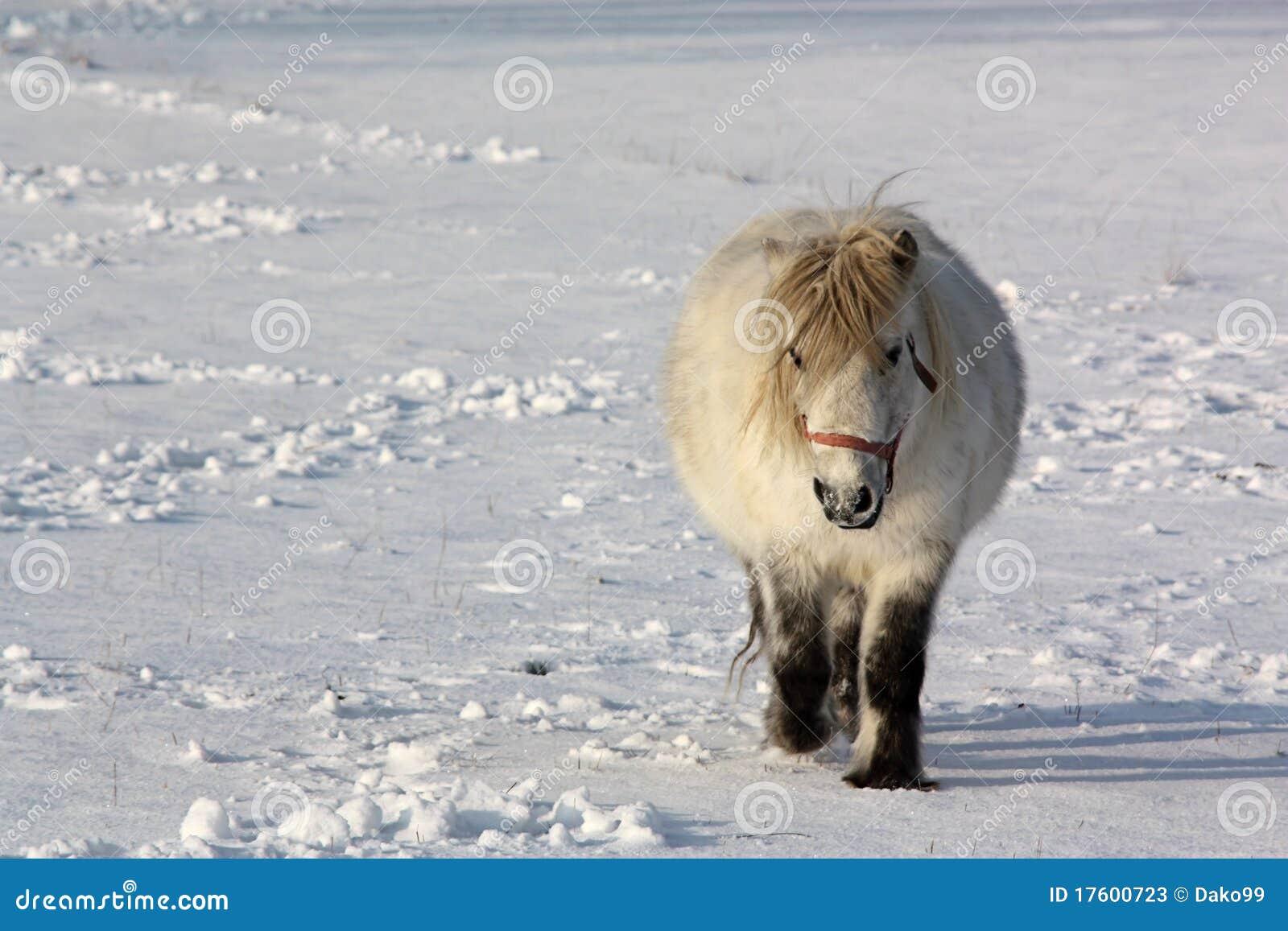 снежок пониа