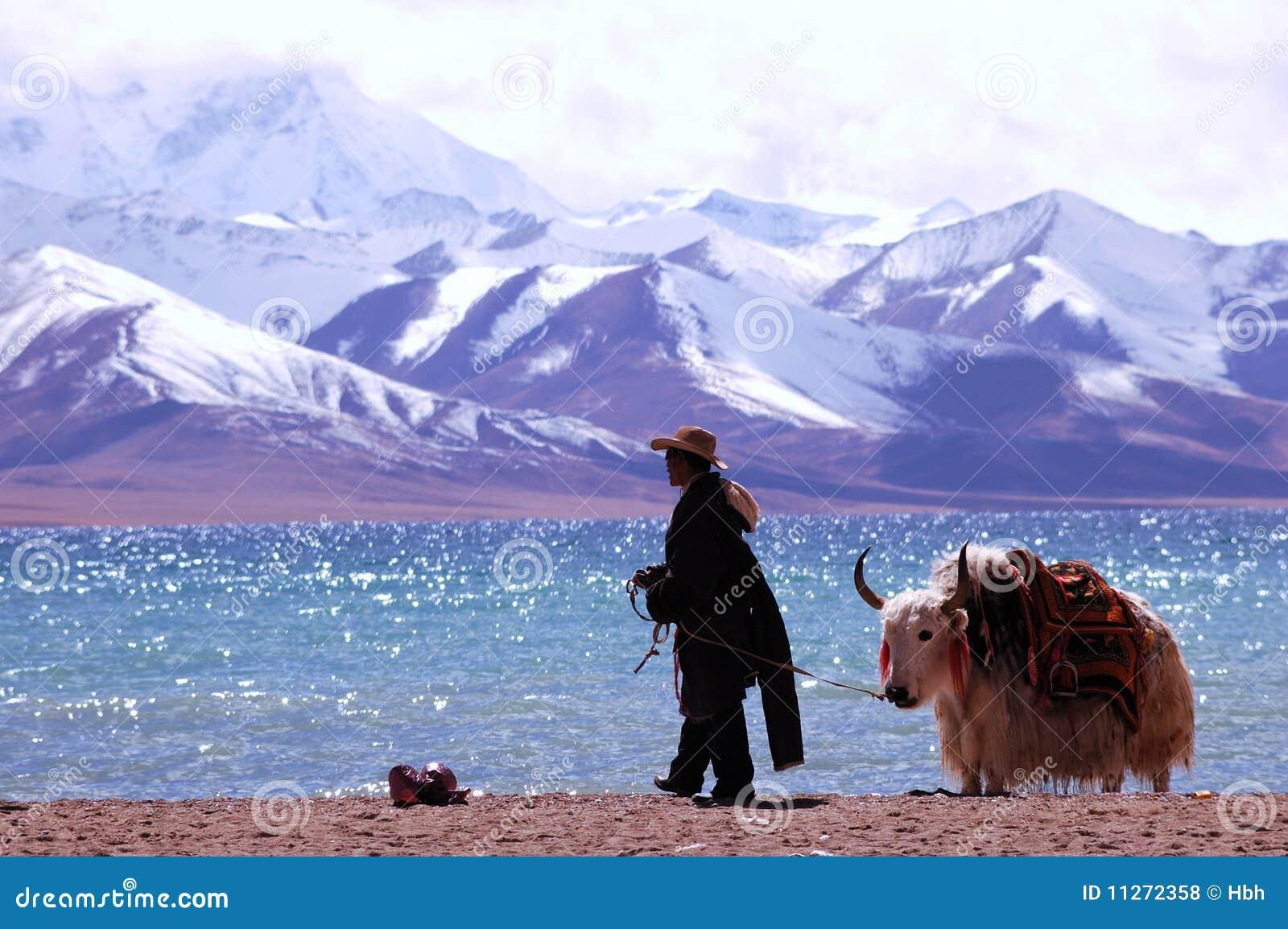 снежок Тибет гор s