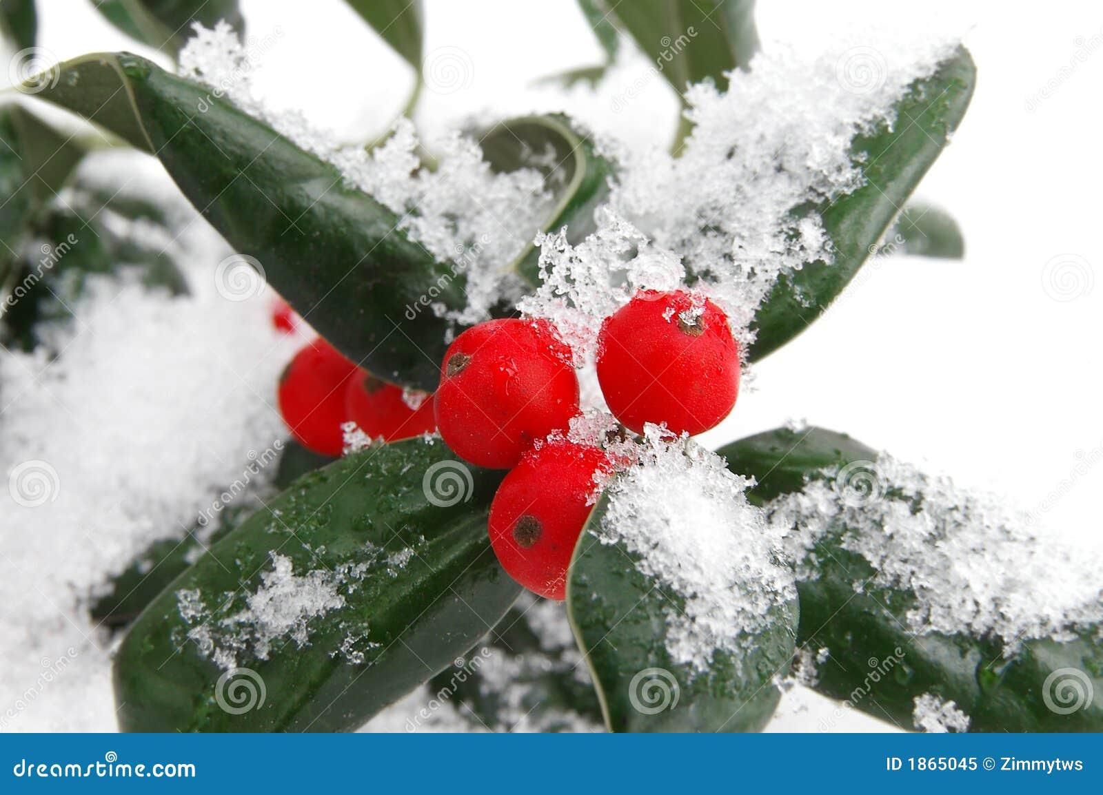 снежок ягод