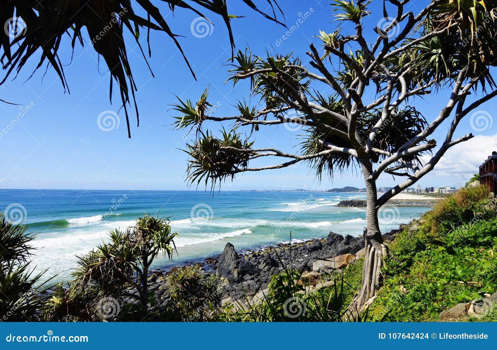 Сногсшибательный океан береговой линии, волны, прибой, пальмы, предпосылка пляжа
