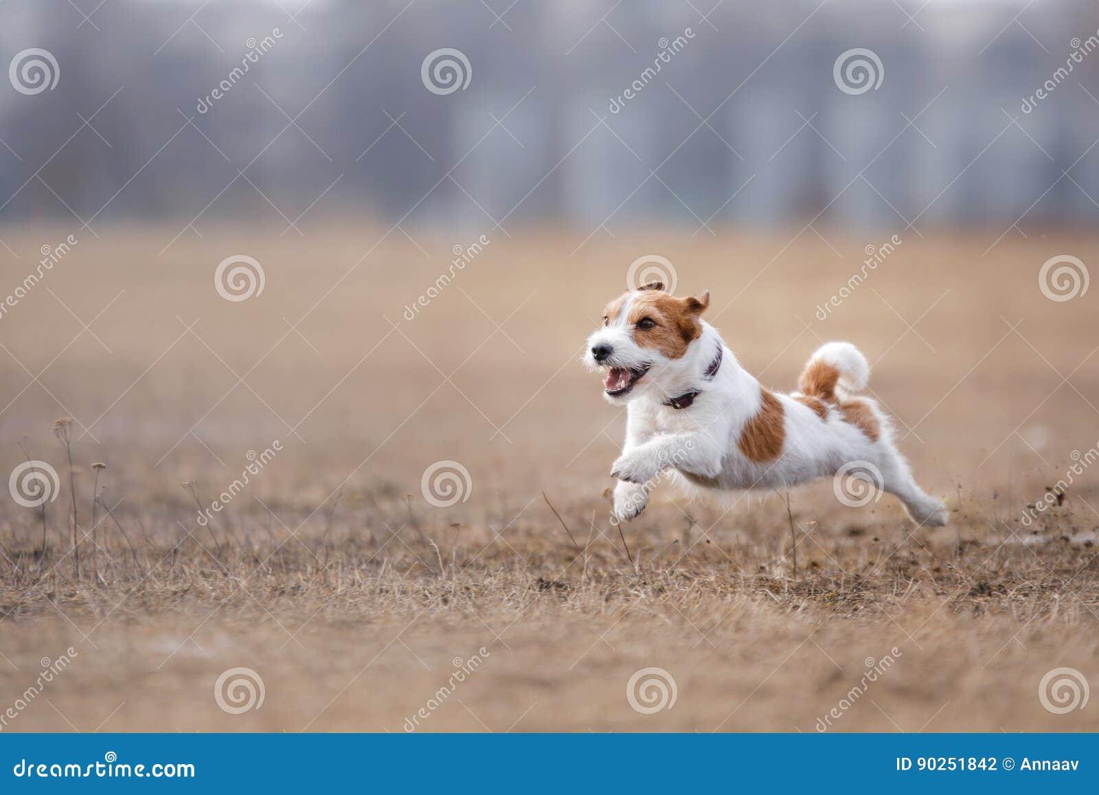 Собака бежать и играя в парке