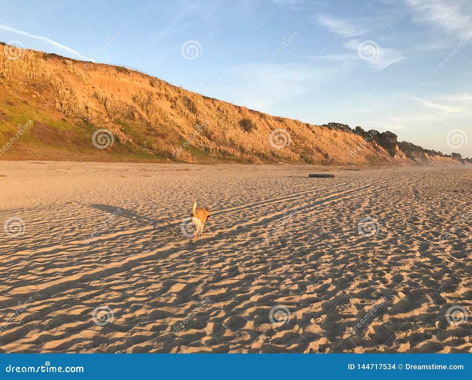 Собака бежит на пустом пляже