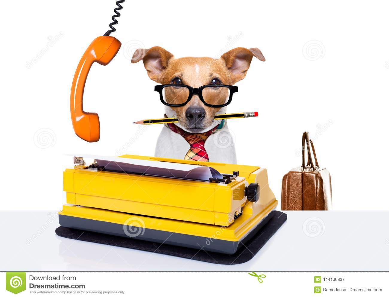 Собака босса работника офиса