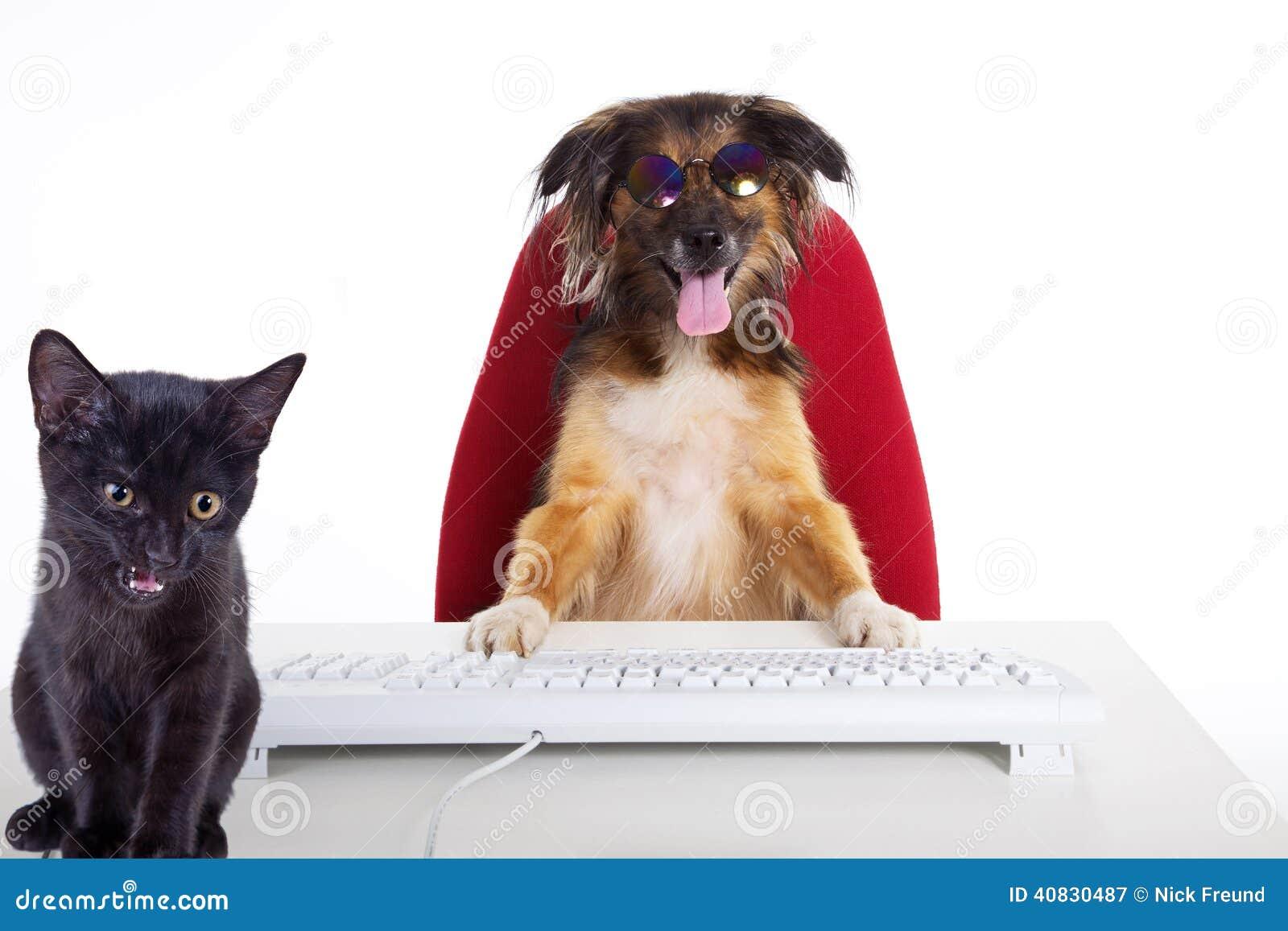 Повар кот и собака
