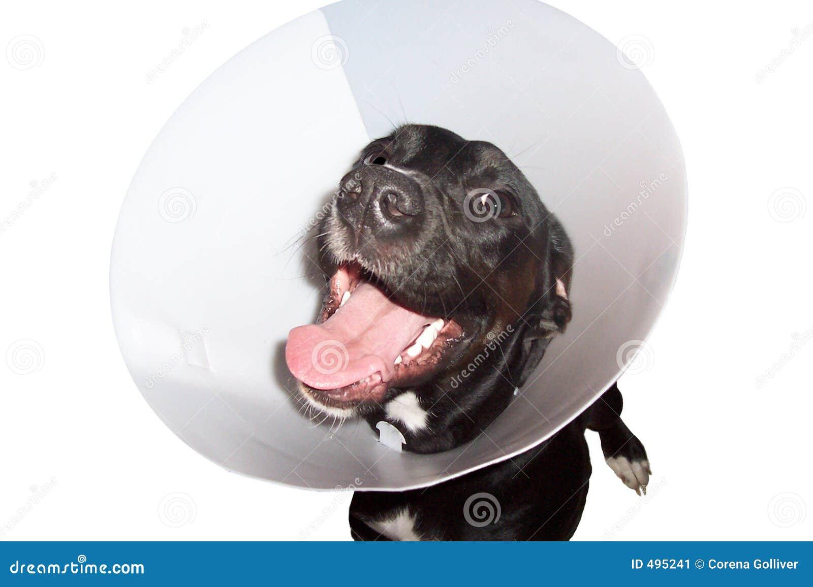 собака ворота elizabethian