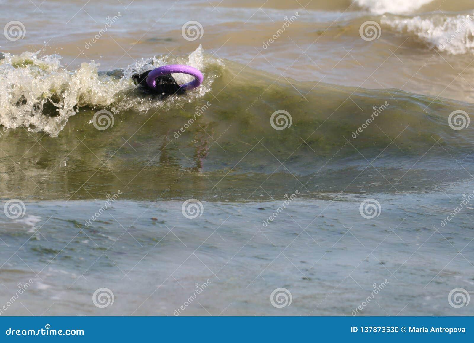 Собака в волне в море с пулером