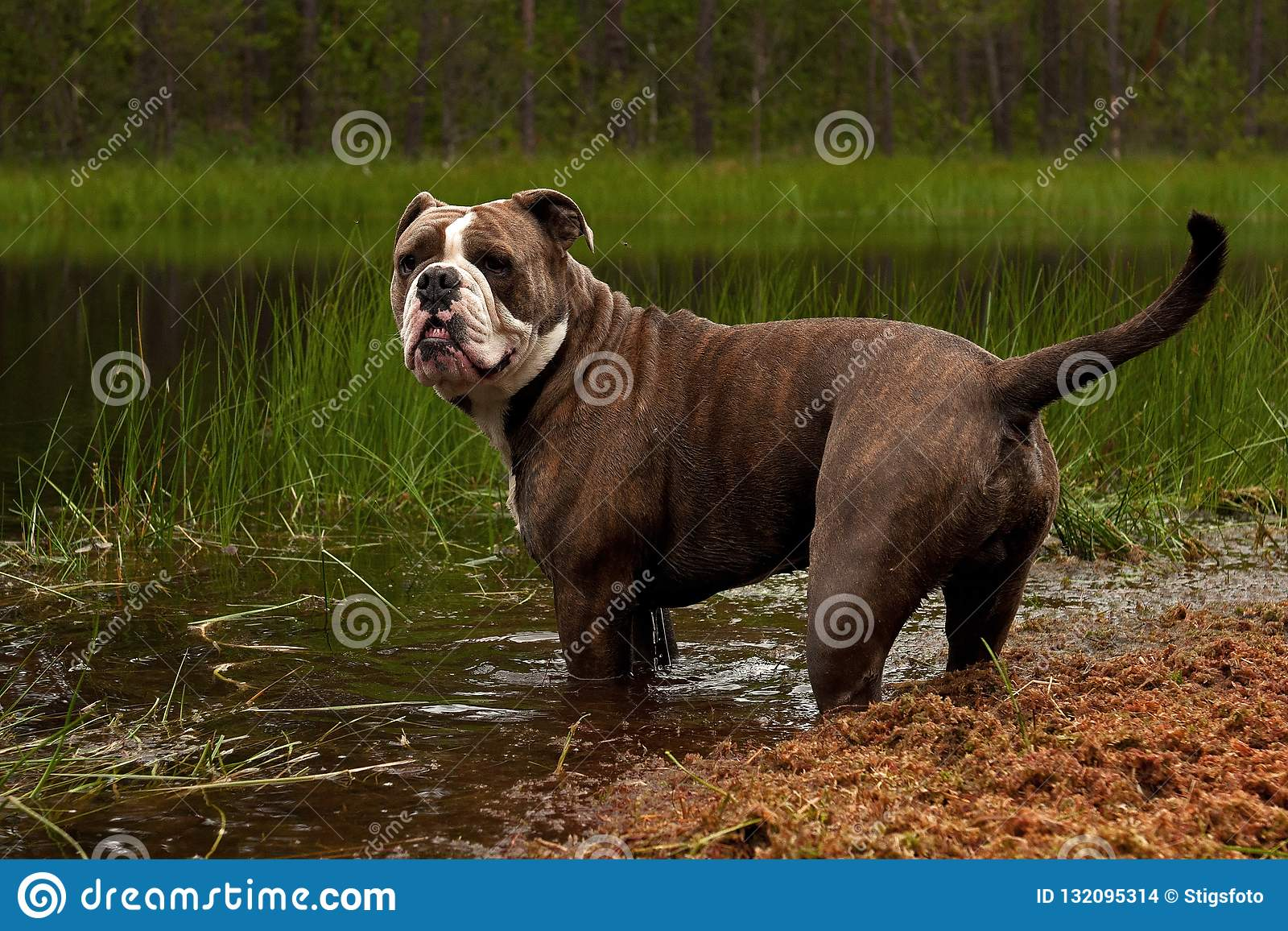 Собака в зеленом озере полесья