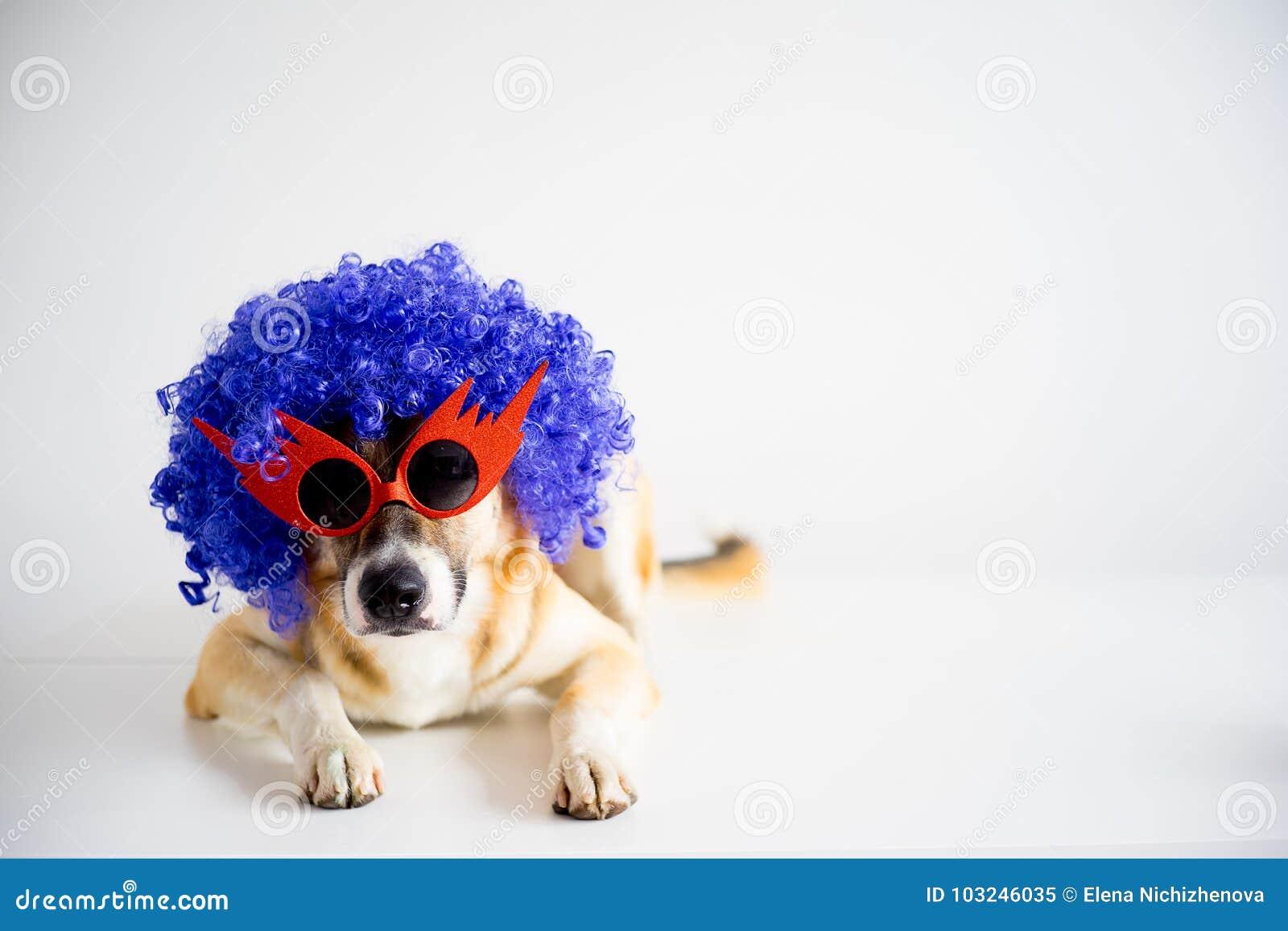 Собака в шляпе партии