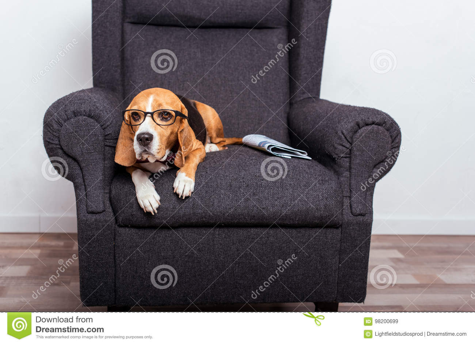Download Собака в Eyeglasses лежа на сером кресле с газетой Стоковое Изображение - изображение насчитывающей родословная, содружественно: 98200699
