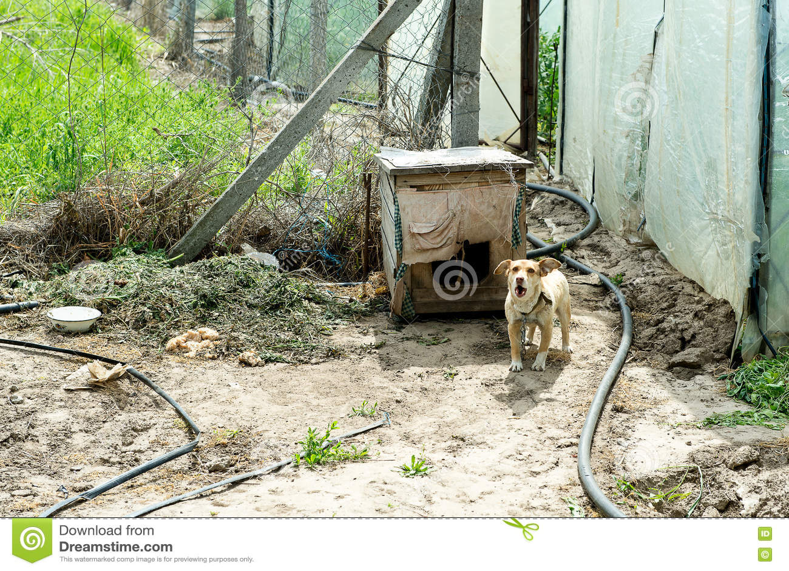 Собака защищая двор разбойников собач собака напольная