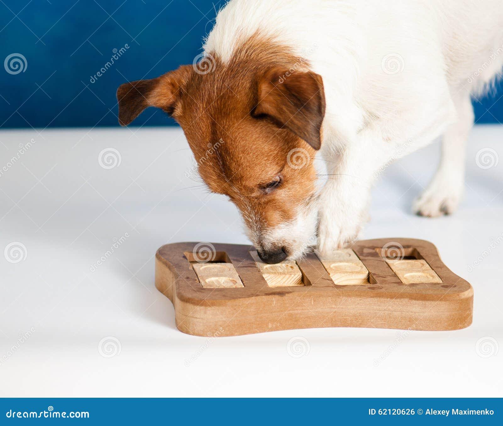 Собака играя интеллектуальную игру