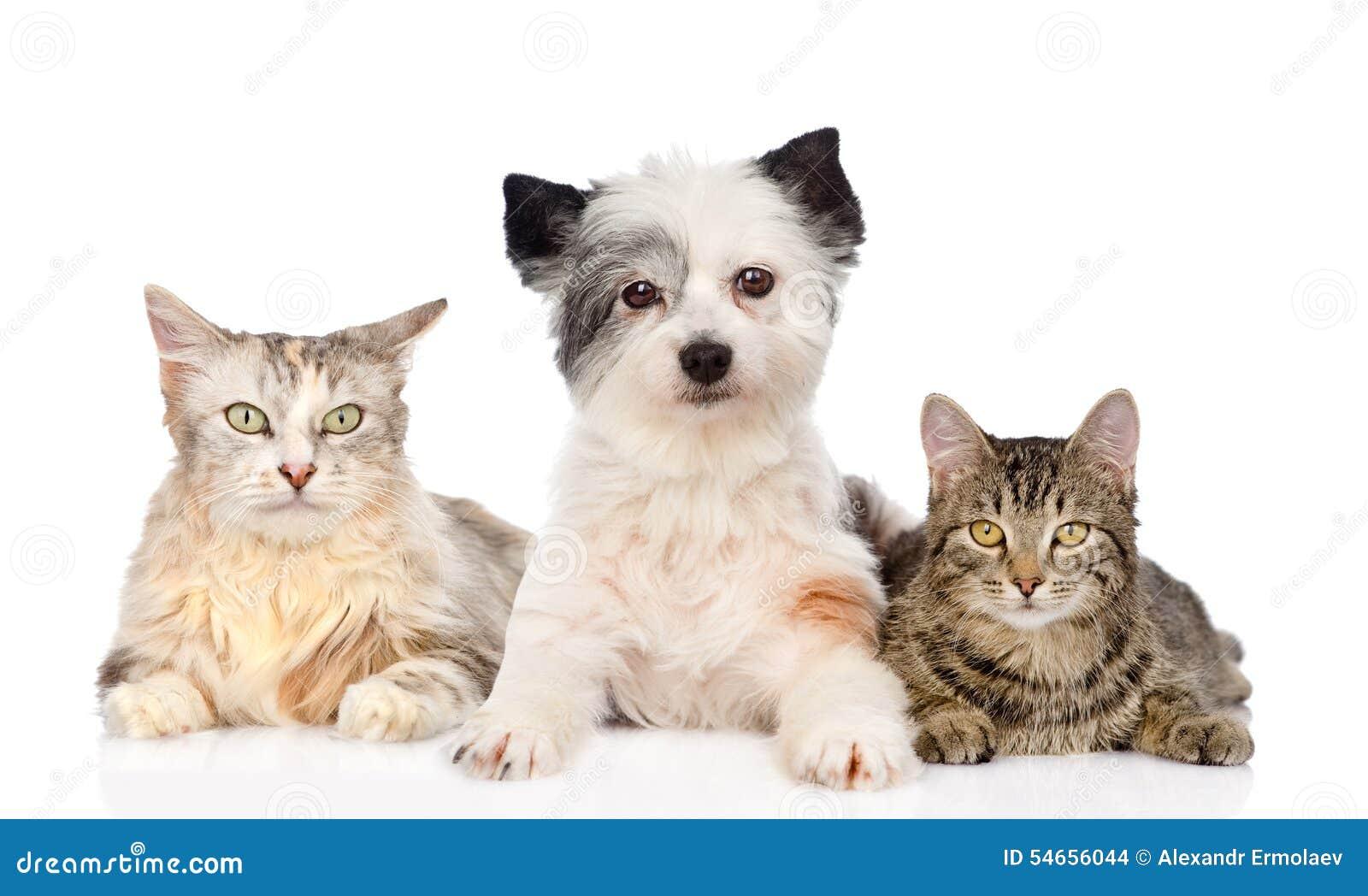 Собака и два кота фото