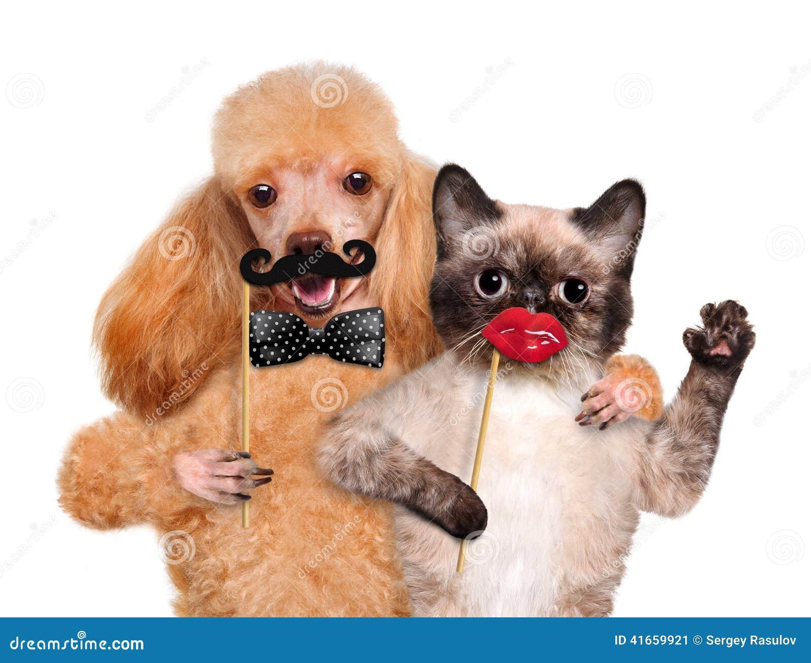 Собака и кошка битника