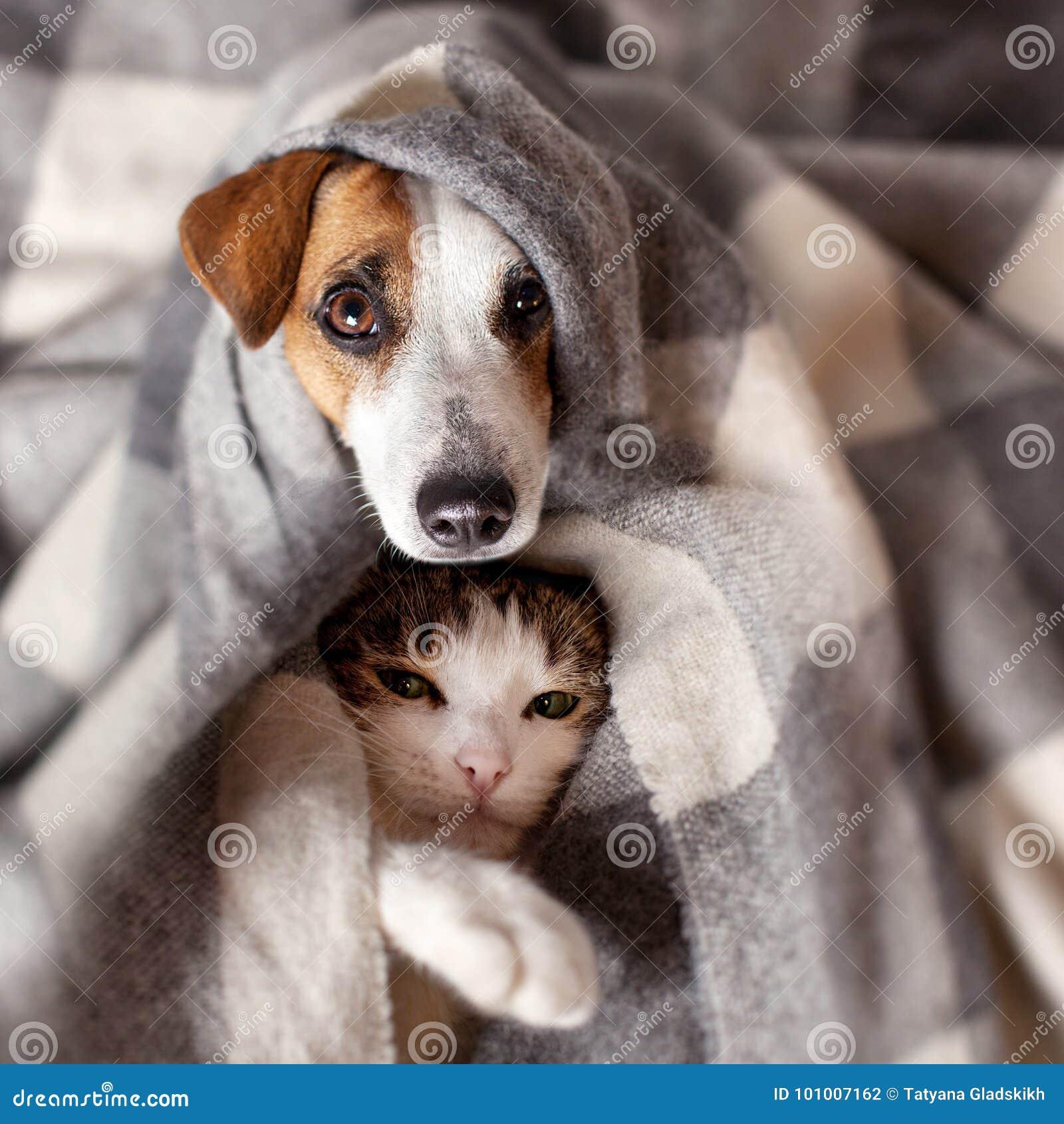 Собака и кошка под шотландкой