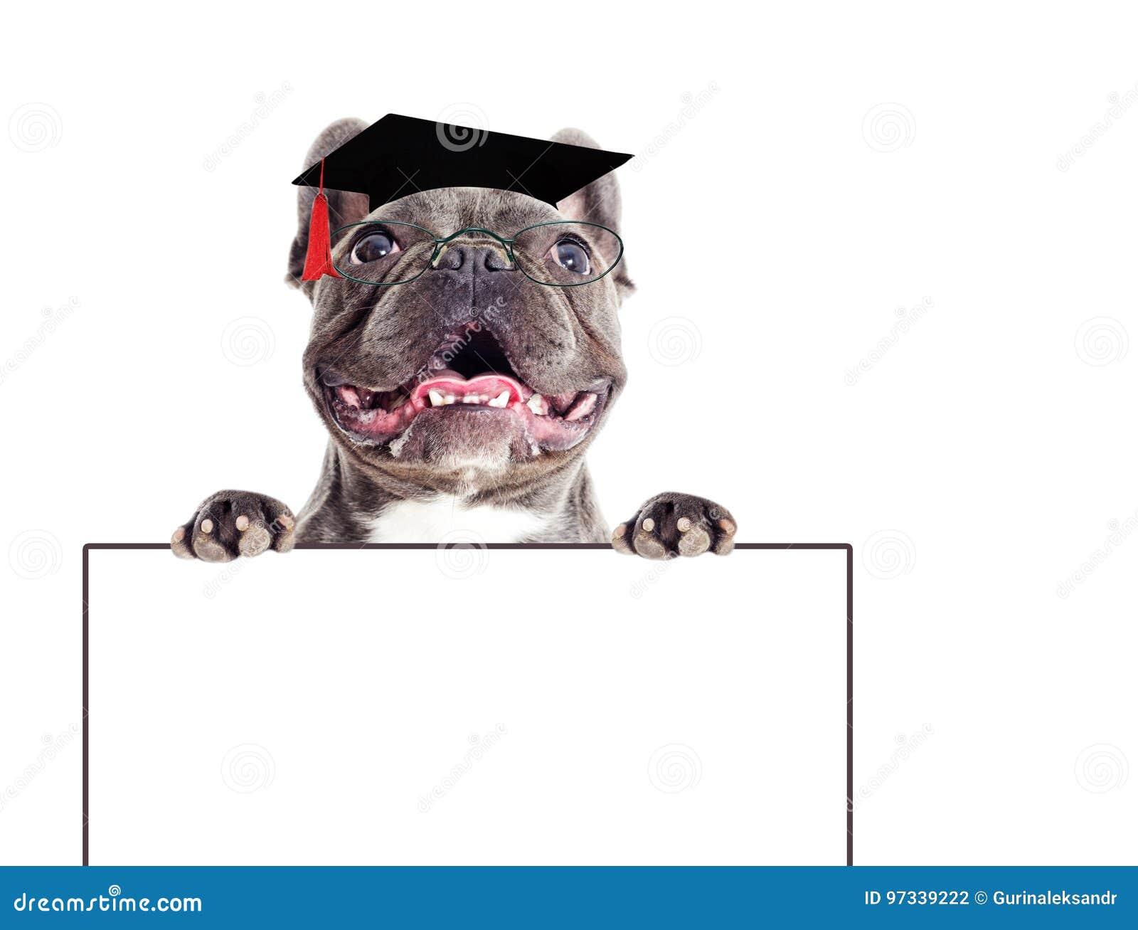 Собака и стекла