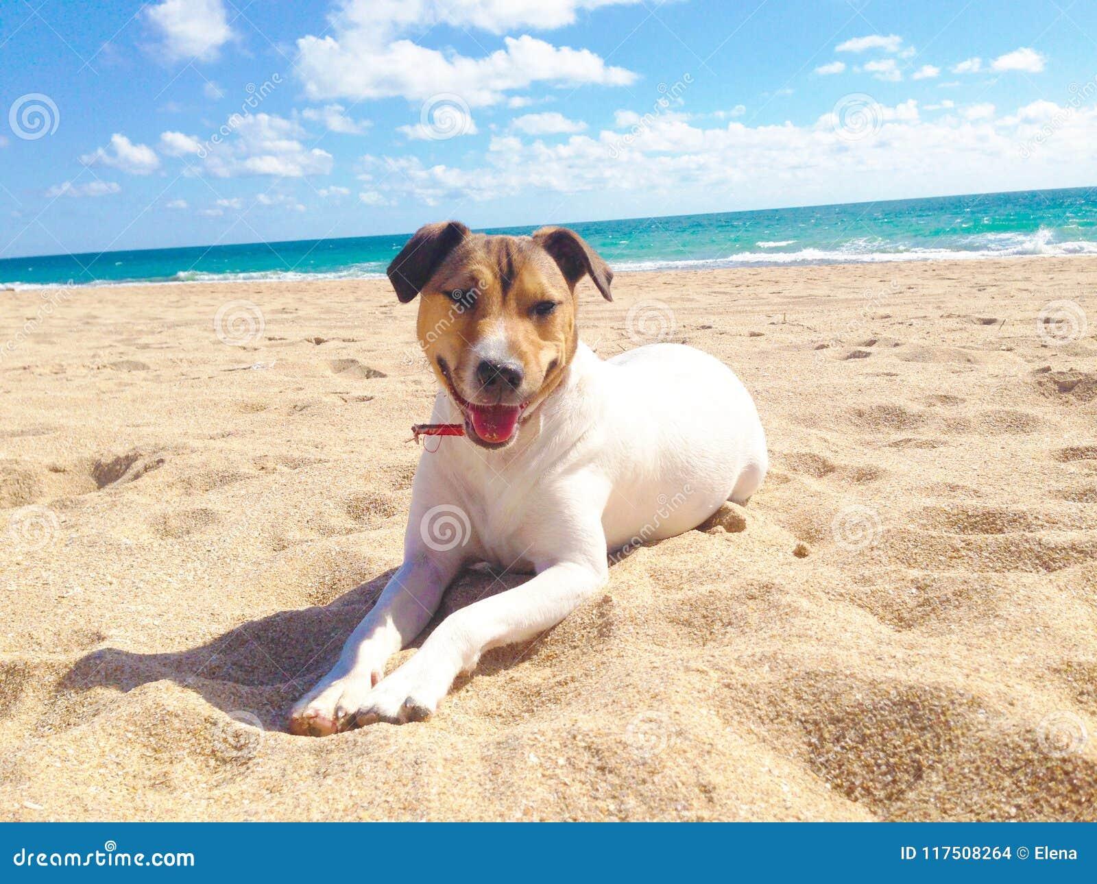 Собака, море и пляж в лете